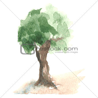Old watercolor tree with green foliage on brown trunk