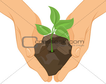 Green sprout in hands