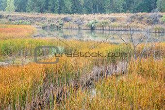 foggy fall day in wetlands