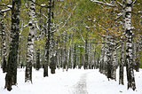 First snow in the autumn park