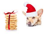 christmas cookies and dog