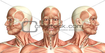 3D male medical figure showing cervical rotation
