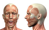 3D male medical figure showing mandible depression front and sid