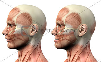 3D male medical figure showing mandible protusion and retrusion