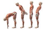 3D medical figure showing trunk flexion, extension and hyerexten