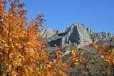 autumn tree in mountains