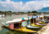 Shikara Boats on Dal Lake, Srinagar, Kashmir, India