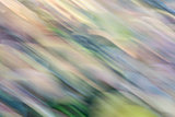 motion blur abstract of foliage