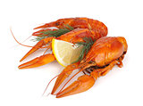 Boiled crawfishes with lemon slice and dill