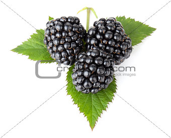 Three blackberries on leaves