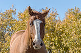 Horse Against Autumn Background