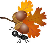 Ant carrying autumn acorns