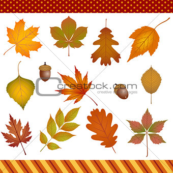 Autumn leaves digital clipart