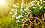 Garden flowers in green grass sunny day