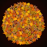 Autumn leaves in the shape of a circle frame