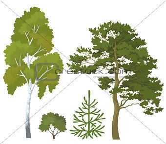 Forest plants set