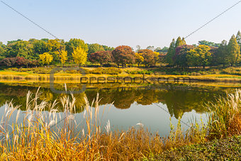 Autum trees and colorful  landscape in Seoul, South Korea