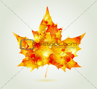 Abstract autumn maple leaf