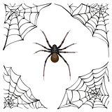 Spiderweb. Big spider web. Scary spider of web. Poison spider