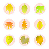 Set of icons autumn leaves.