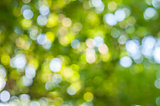 Green and yllow bokeh abstract light background, outdoor
