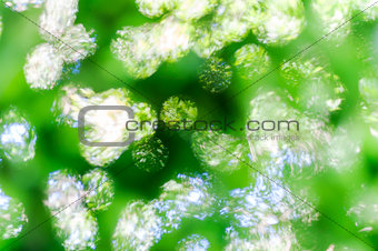Green bokeh abstract light background 1