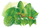 Tropical Jungle Plants Illustration