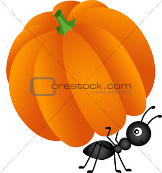 Ant carrying pumpkin