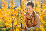 Woman winegrower inspecting vines in vineyard outdoors in autumn