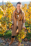 Portrait of woman winegrower standing in autumn grape field