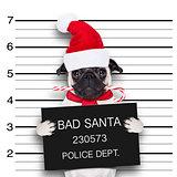 mugshot santa dog