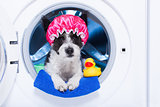washing dog