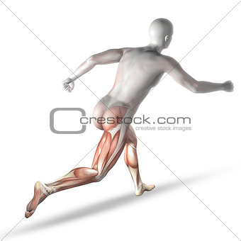 3D male medical figure running with partial muscle map