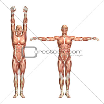 3D male medical figure showing shoulder abduction and adduction