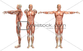 3D male medical figure showing shoulder abduction and horizontal