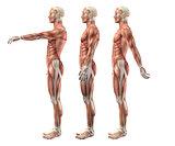 3D male medical figure showing shoulder flexion, extension and h