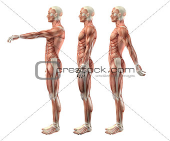 3D male medical figure showing shoulder flexion, extension and h