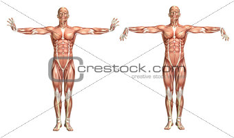 3D medical figure showing wrist extension and flexion