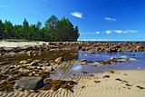 White Sea shore during low tide. Karelia, Russia