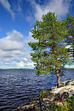 Karelian landscape: pines on the rocks. Lake Pongoma, Russia