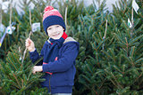 boy shopping for christmas tree