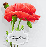 Background with poppies