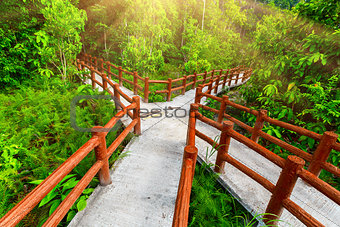 crossed bridges in tropical forest