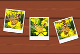 Vintage photos of butterfly