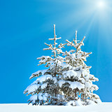 Snowy fir trees on blue sunshine sky background
