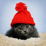 kitten in a red hat