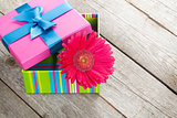 Purple gerbera flower in gift box