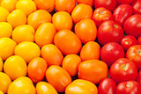 Colorful tomatoes. Yellow, orange and red