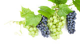 Bunch of red and white grapes