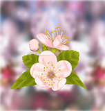 Cherry Blossom, Blur Nature Background